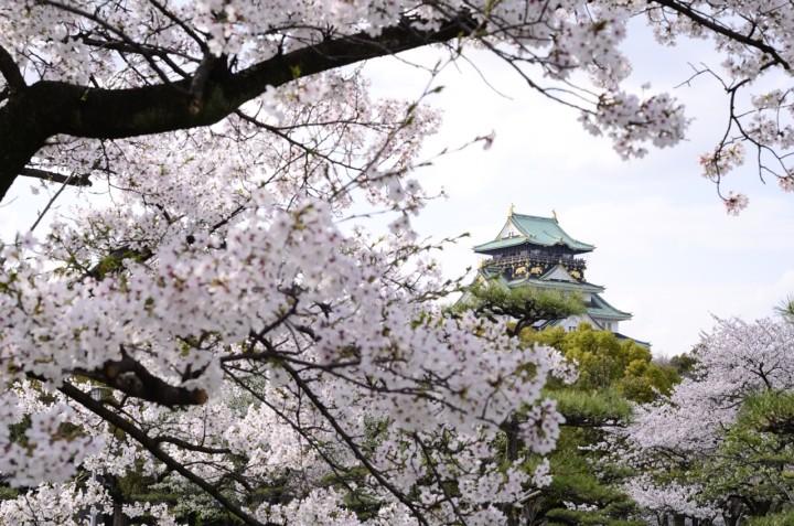 大阪城公園で写真