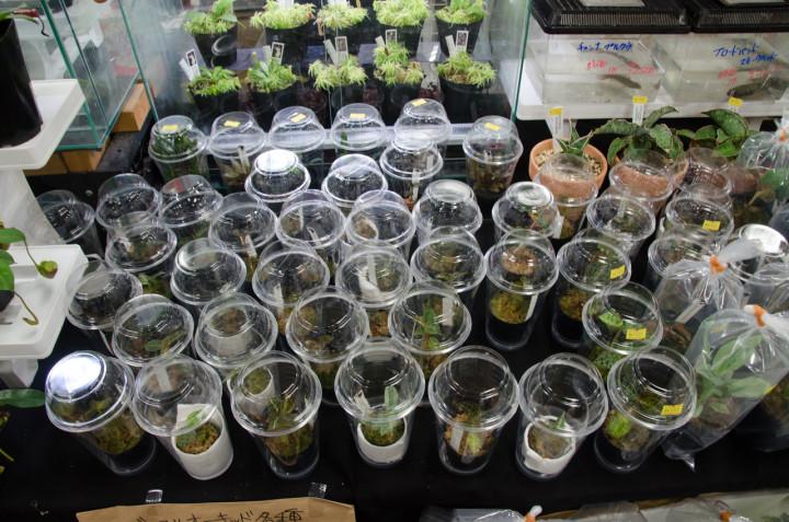 BlackOut-Tokyo2015-b-box-aquarium
